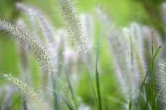 Wild grass in meadow Stock Photos