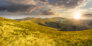 Wild grass on mountain top at sunset Stock Image