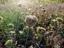 Wild grasses. Wild grass in a park Stock Photography