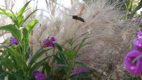Wild grass and pink flowers. Growing in a field stock video