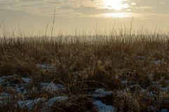 Wild Grass plants with water drops from the snow melted by the s. Un creating fog in the distance on a cold winter morning Stock Image