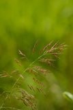 Wild grass. Shallow depth of field Stock Photo