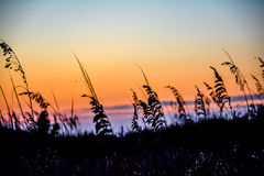 Wild grass in the summer sunset Royalty Free Stock Photos