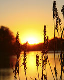 Wild grass sunset Stock Images