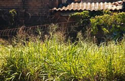 WILD GRASS TAKING OVER PREMISES OF ABANDONED INDUSTRIAL SITE. View of long wild green grass growing next to a fence enclosing the premises of a rundown stock images