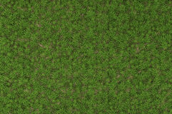 Wild grass texture Royalty Free Stock Photo