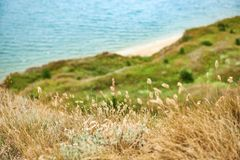 Wild grass and trees on high coast by the sea, beautiful landscape, summer travel concept Stock Photo