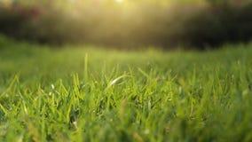 Wild grass under the sun light Stock Photos