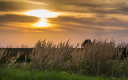 Wild grass under warm evening light Royalty Free Stock Images