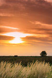 Wild grass under warm evening light Royalty Free Stock Photography