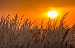 Wild grass under warm evening light Stock Photos