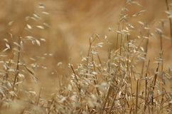 Wild Grasses. In the Blowing gently in the wind Stock Photos