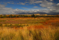 Wild Grasses. After the storm the wild grasses warm to the skies in Grand Junction Colorado Stock Photos