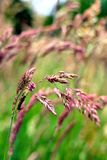 Wild grasses Stock Images