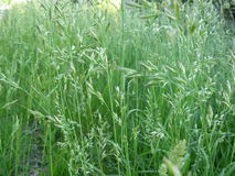 Wild grasses Stock Image