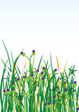 Wild Grasses Flowers Background_eps Stock Photos