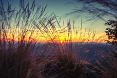 Wild grasses at golden summer sunset landscape Stock Photos