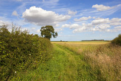 Wild grasses and hedgerow Royalty Free Stock Image