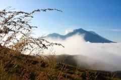 Wild grasses at high altitude Stock Photo