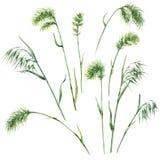 Wild Grasses Set Stock Images