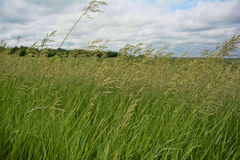 Wild Grasses and Sky 2 Royalty Free Stock Photos
