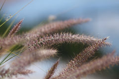 Wild grasses in the summer breeze Stock Images