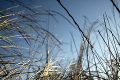 Wild grasses Stock Photography