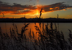 Wild grasses and sunset. Sun setting on lake and wild grasses Stock Photography