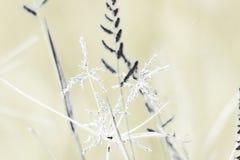 Wild grasses texture 2 stock photography