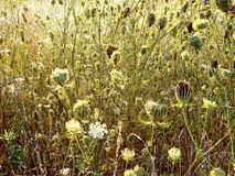Wild grasses. Wild grass in a park Stock Image