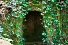 Wild green cave Royalty Free Stock Photo
