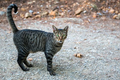 Wild green-eyed cat outdoor. Nature. Stock Photography