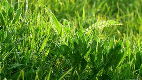 Wild green grass stock video footage