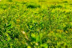 Wild green grass with some small florets background stock photography