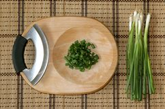 Wild Green Onion shoots Stock Photography