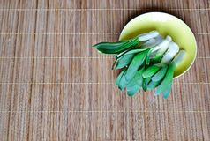 Wild green onions lie on a yellow saucer. Natural food. Gifts of nature. Royalty Free Stock Photos