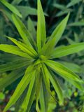 Wild green plant stock photo