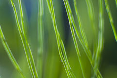 Wild green plants Royalty Free Stock Image