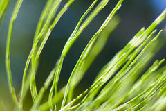 Wild green plants Royalty Free Stock Images