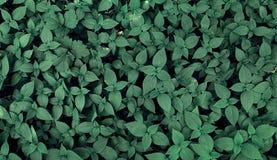 Wild green plants Stock Photos