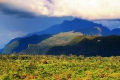 Wild green rain forest Borneo Royalty Free Stock Photos