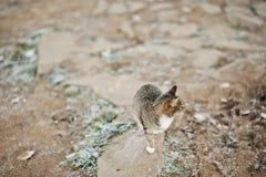 Wild grey cat on frozen stone looks toward. Royalty Free Stock Images