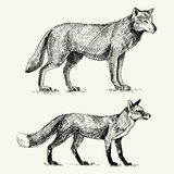Wild grey wolf and red fox engraved hand drawn in old sketch style, vintage animals Royalty Free Stock Photos