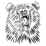 Wild grizzly, Hand drawn vector roaring bear. Stock Image