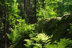 Wild grow. Landscape in National Park Czech Switzerland, Czech republic, Europe stock photography