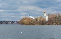 Wild gull flying over Dnepr river Stock Photography