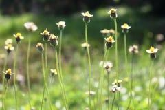 wild härlig blomma royaltyfria bilder
