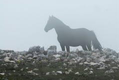 wild häst arkivfoton