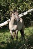 wild häst Royaltyfri Foto
