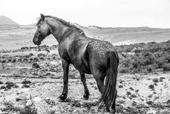 wild häst Royaltyfri Fotografi